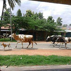 Mahadevapura, Mandya httpsuploadwikimediaorgwikipediacommonsthu