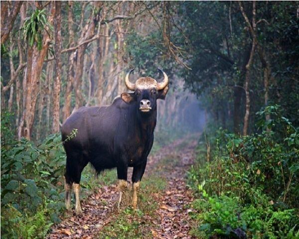 Mahananda Wildlife Sanctuary Dooars Ecoviillege Spend your vacation at Dooars with Mahananda