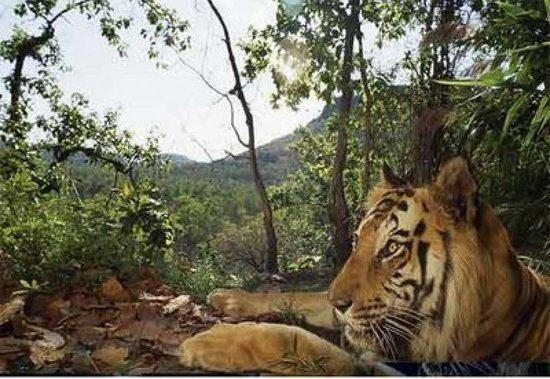 Mahananda Wildlife Sanctuary Mahananda Wildlife Sanctuary Darjeeling Top Tips Before You Go