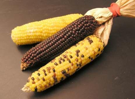 Maize milling
