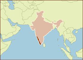 Malabar region Pepper Black Malabar Cracked Savory Spice