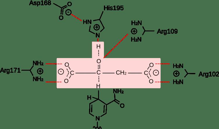 Malate dehydrogenase About Page template By Adobe Dreamweaver CC