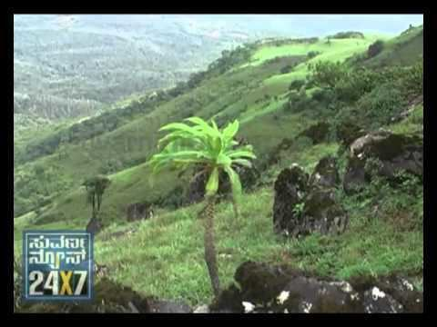 Malenadu SUVARNA NEWS MALENADU RAIN SPECIAL YouTube