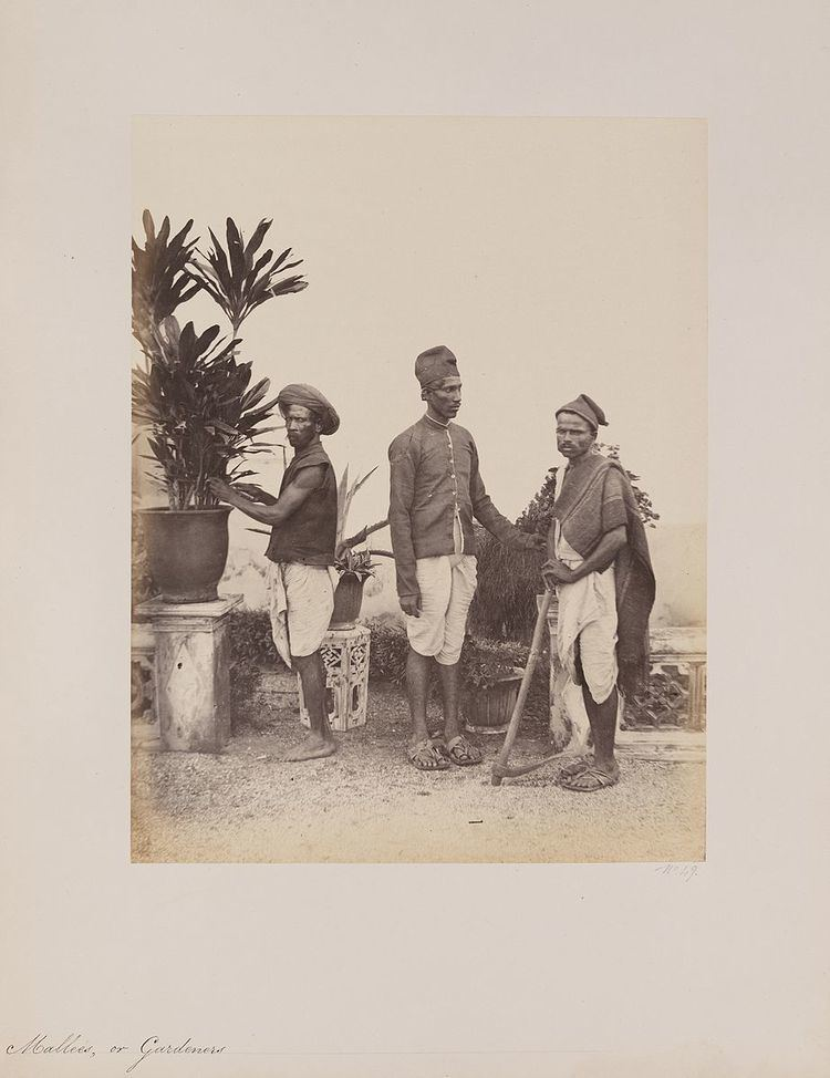 Mali caste