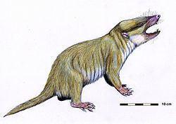 Mammaliaformes httpsuploadwikimediaorgwikipediacommonsthu
