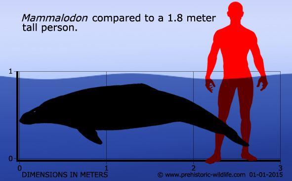 Mammalodon Mammalodon