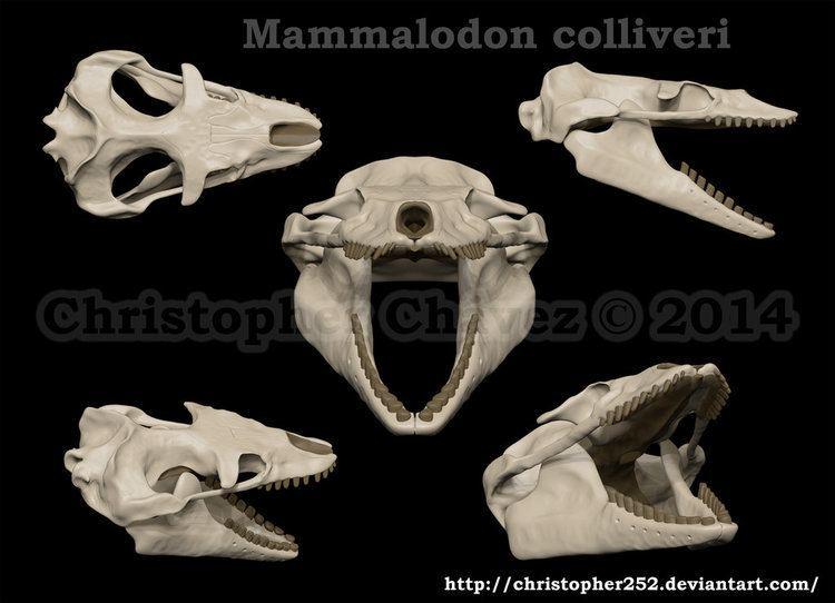 Mammalodon mammalodon DeviantArt