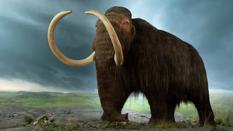Mammoth Mammoth Discovery Could Revise Earliest Date of Humans in the