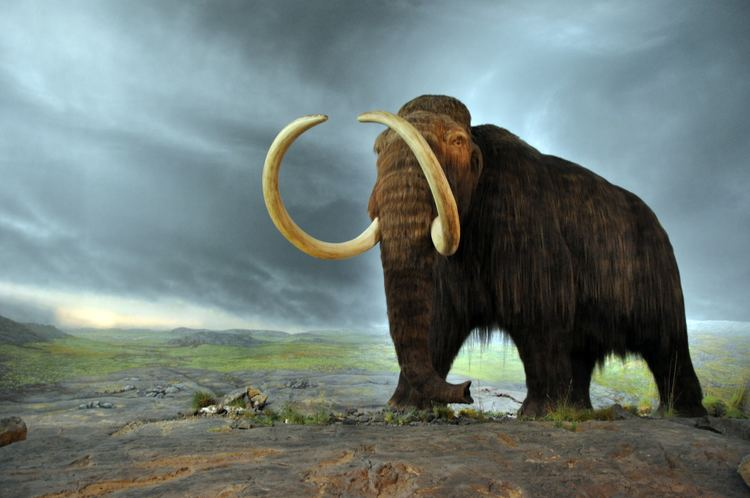 Mammoth Scientists Say They Could Bring Back Woolly Mammoths Within Two