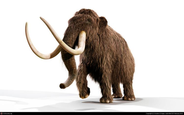 Mammoth Mammoth history and some interesting facts