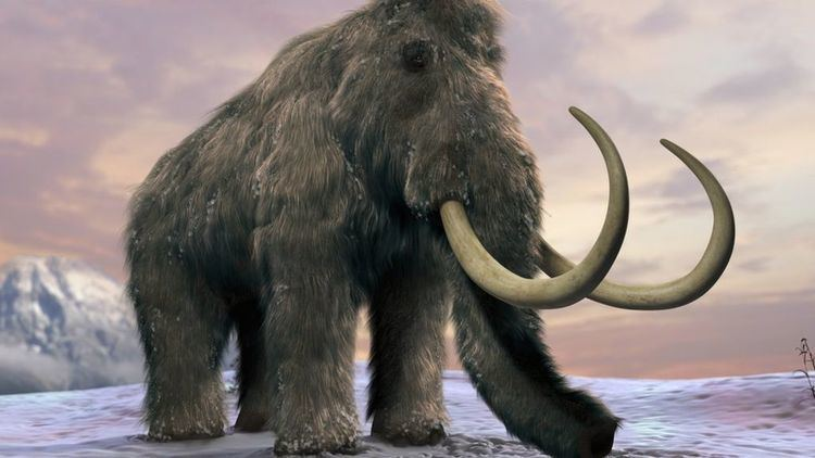 Mammoth Last woolly mammoths 39died of thirst39 BBC News