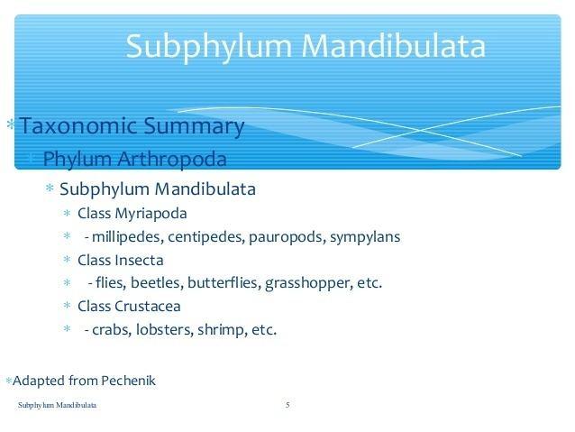 Mandibulata Subphylum mandibulata By JQ