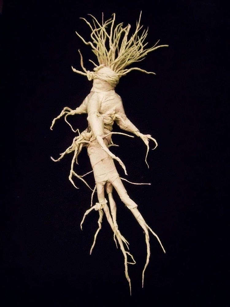 Mandrake 1000 images about Mandrake on Pinterest The plant Medieval and Wicca