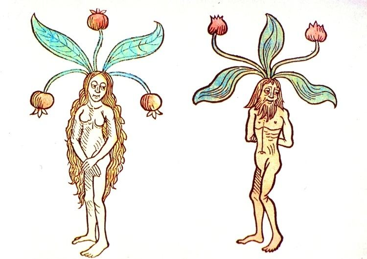 Mandrake The Secrets of Spices A Compendium of Botanical and Culinary Lore