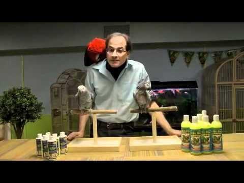 Marc Morrone Buy Parrots and Exotic Pets Parrots of the World Pet Shop
