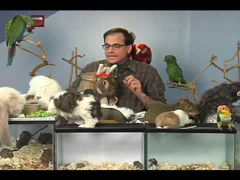 Marc Morrone Marc Morrone39s Holiday Pet Tips YouTube