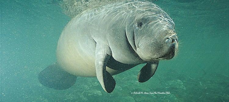 Marine mammal ICMMPA International Committee on Marine Mammal Protected Areas