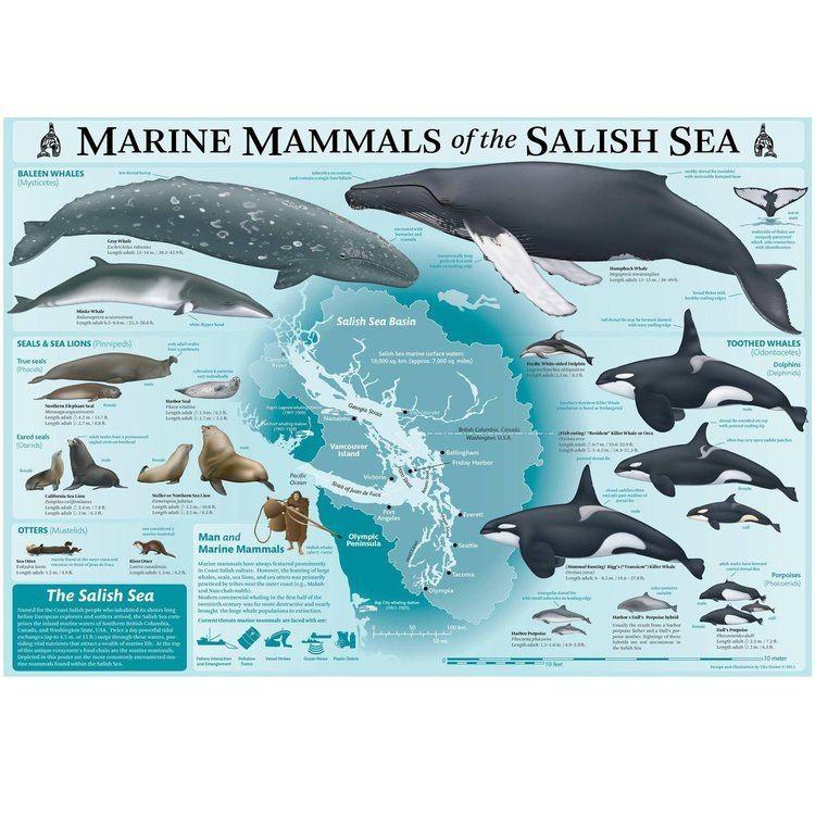 Marine mammal cdnshopifycomsfiles102491083productsMarin