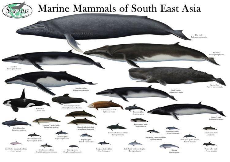 Marine mammal Marine Mammal Research Laboratory