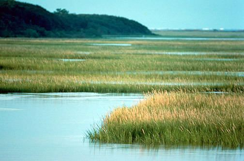 Marsh What Is A Marsh