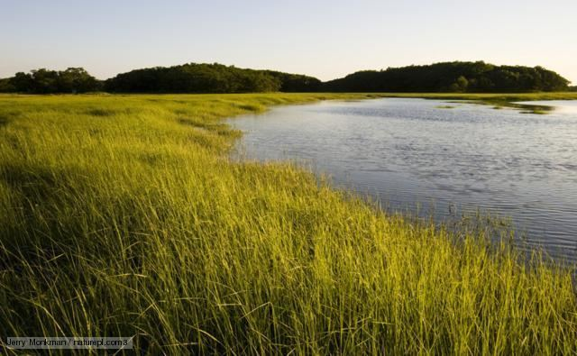 Marsh BBC Nature Marsh videos news and facts