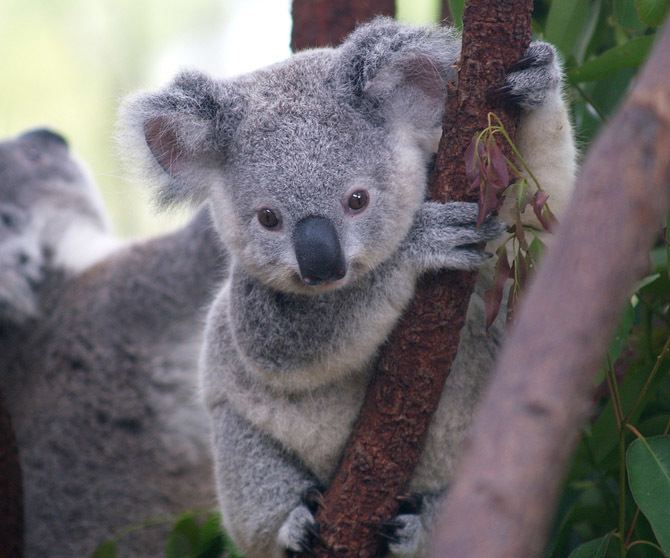 Marsupial Marsupial DNA Redraws Family Tree WIRED