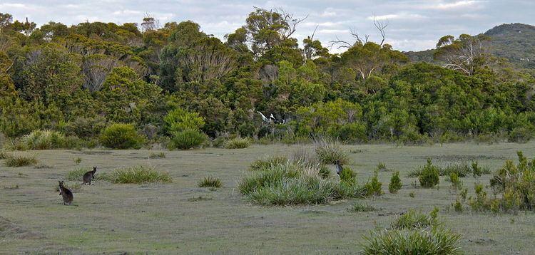 Marsupial lawn