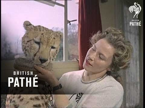 Mary Chipperfield Mary Chipperfield Animal Trainer Aka Woman Animal