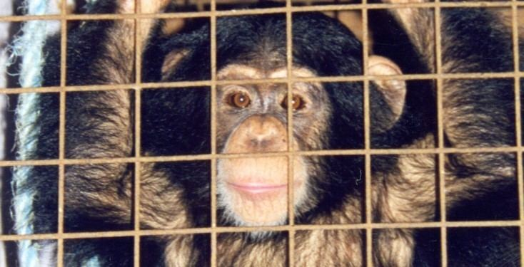 Mary Chipperfield Chipperfield39s Stop Circus Suffering