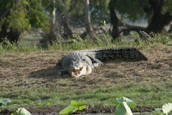 Mary River (Northern Territory) httpsmediacdntripadvisorcommediaphotos01