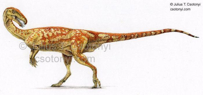 Masiakasaurus csotonyicomMasiakasaurusjpg