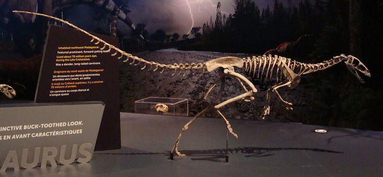 Masiakasaurus Masiakasaurus Wikipedia