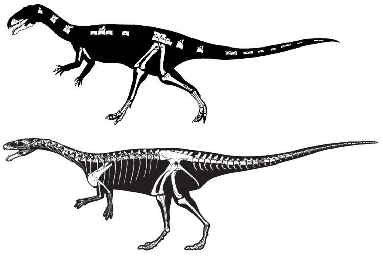 Masiakasaurus Masiakasaurus Gets a Few TouchUps Science Smithsonian