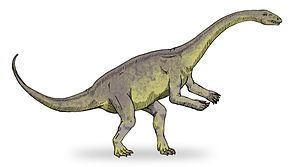 Massospondylidae httpsuploadwikimediaorgwikipediacommonsthu