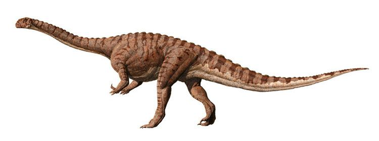 Massospondylus Sidhe Hound Massospondylus carinatus M kaalae Massospondylus