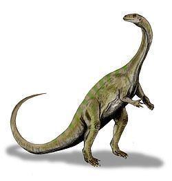 Massospondylus httpsuploadwikimediaorgwikipediacommonsthu