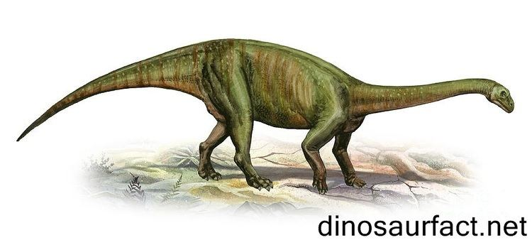 Massospondylus Massospondylus dinosaur