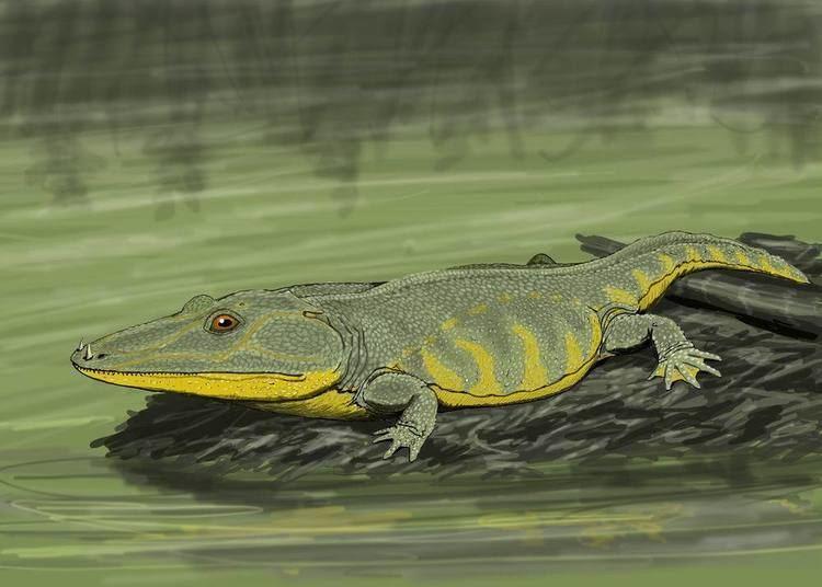 Mastodonsaurus Mastodonsaurus Wikipedia