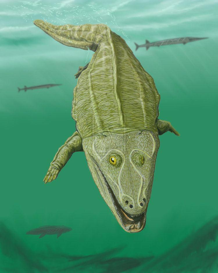 Mastodonsaurus Mastodonsaurus spp