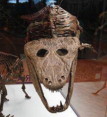 Mastodonsaurus httpsuploadwikimediaorgwikipediacommonsthu
