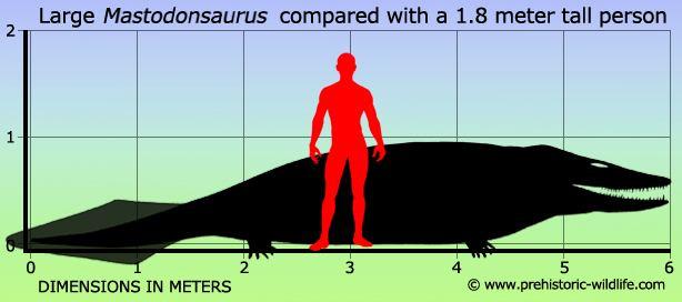 Mastodonsaurus Mastodonsaurus
