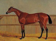 Matilda (horse) httpsuploadwikimediaorgwikipediacommonsthu