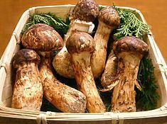Matsutake httpsuploadwikimediaorgwikipediacommonsthu