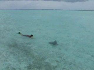 Meemu Atoll httpsmediacdntripadvisorcommediavideot01