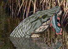 Megalocephalus httpsuploadwikimediaorgwikipediacommonsthu