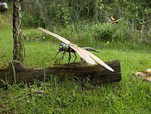 Meganisoptera Meganisoptera Wikipedia