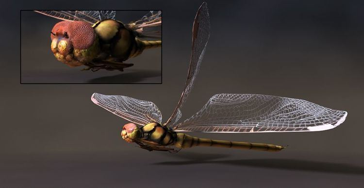 Meganisoptera Meganisoptera 01 Ancient organisms CG Gallery Computer