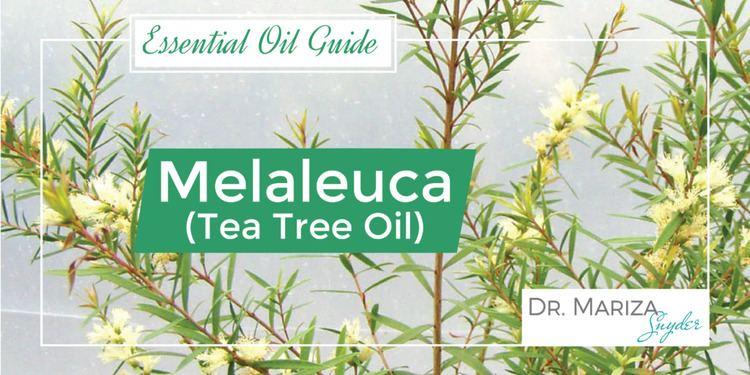 Melaleuca doTERRA Melaleuca Tea Tree Essential Oil Uses amp Benefits