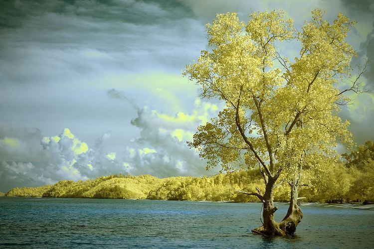 Melur Beautiful Landscapes of Melur