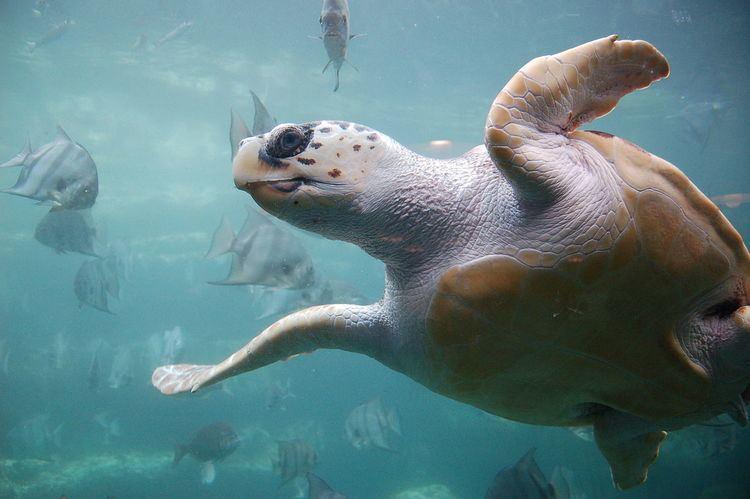 Memorandum of Understanding concerning Conservation Measures for Marine Turtles of the Atlantic Coast of Africa